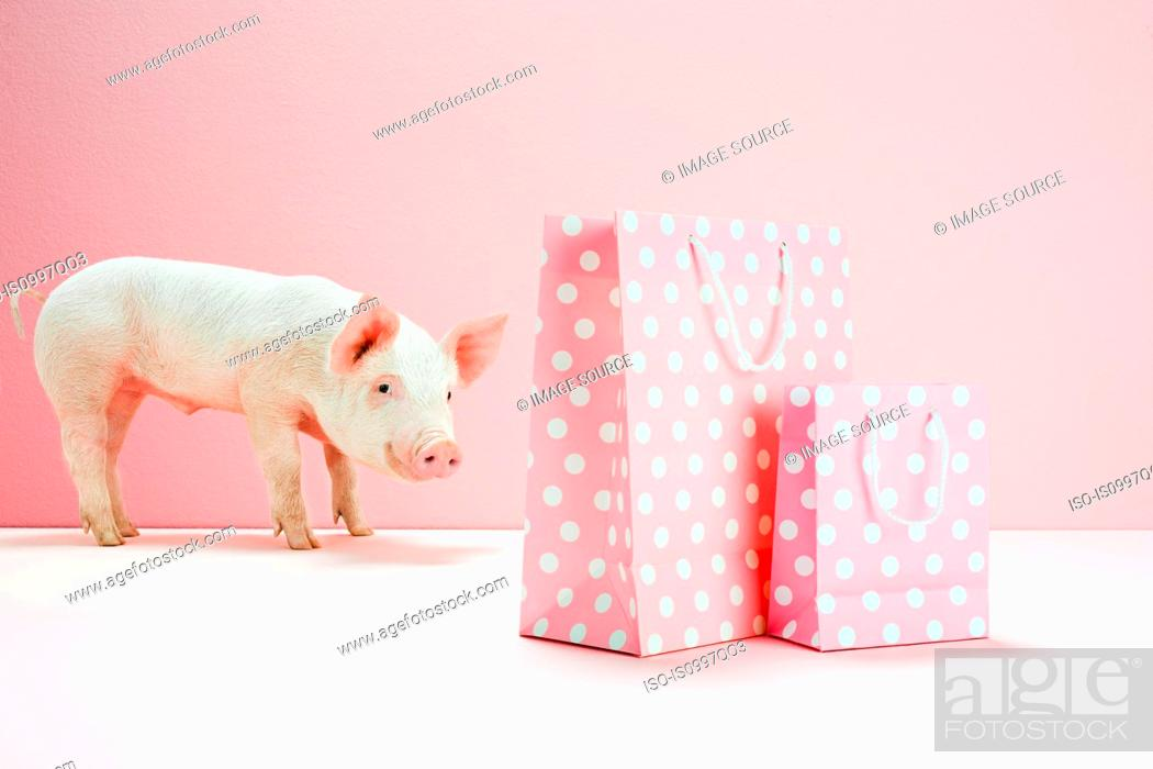 Stock Photo: Piglet looking at pink spotted shopping bags.