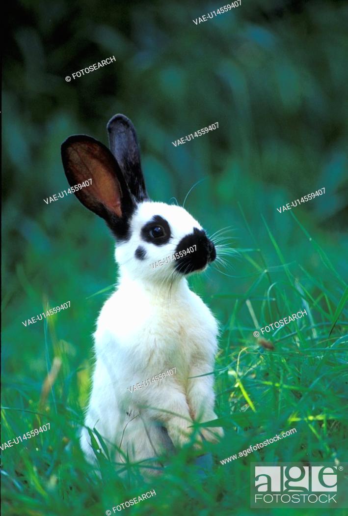Stock Photo: pet, animals, black, bunny.