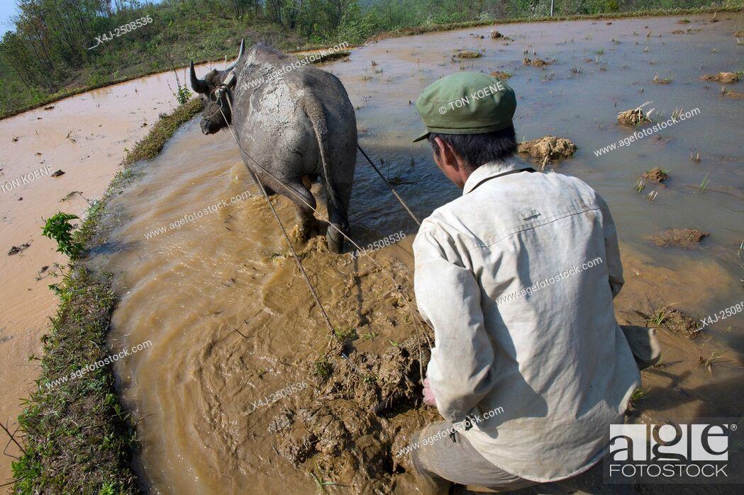 Stock Photo: ploughing rice fields in Sapa, Northern Vietnam.