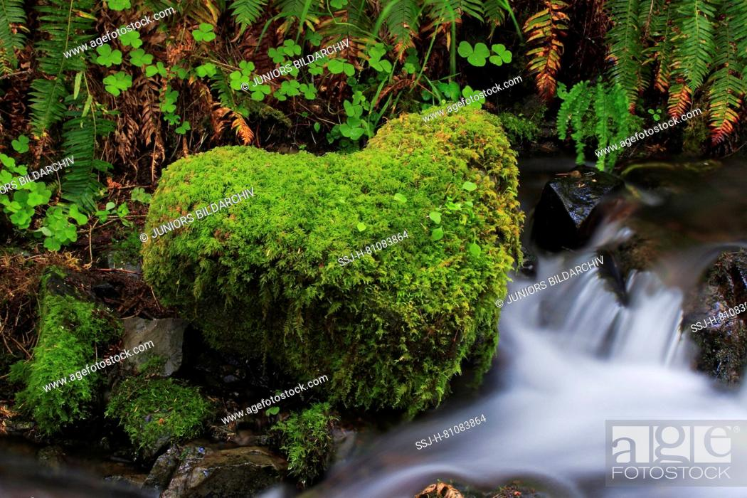 Stock Photo: Moss-covered stone in heart shape on a stream. Washington, USA.