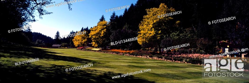 Stock Photo: flower, sky, lawn, forest, tree, panorama.