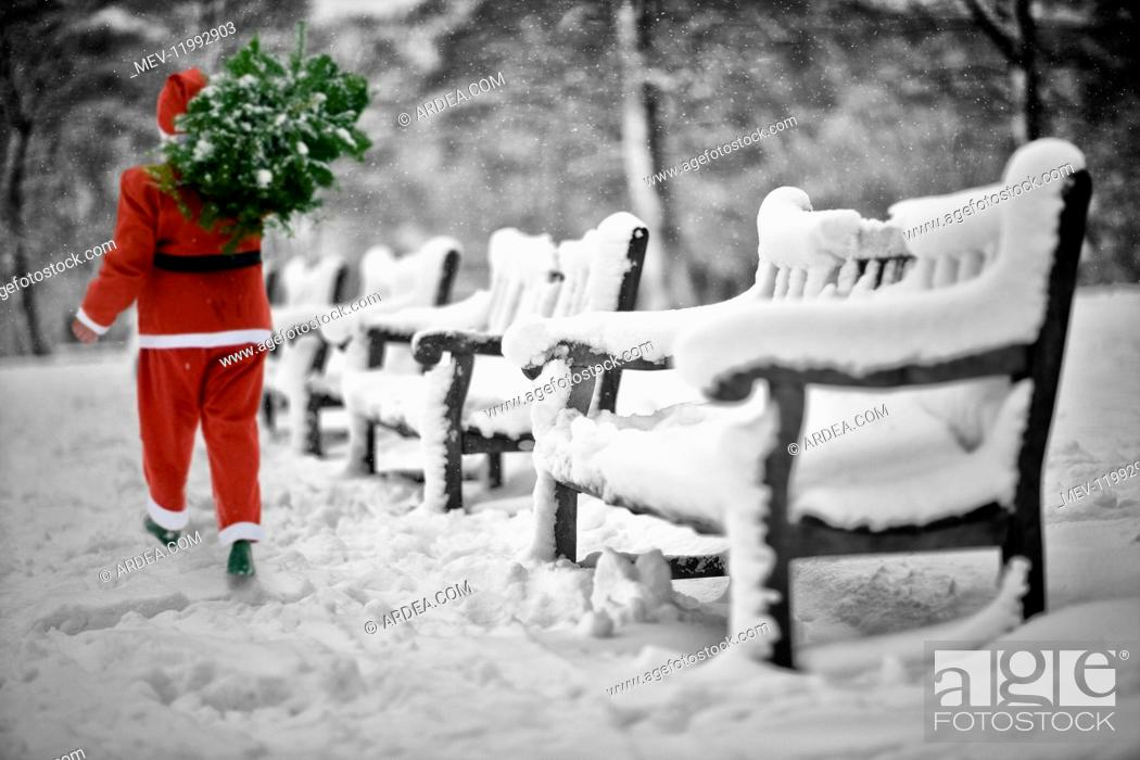 Stock Photo: Father Christmas carrying Christmas tree walking past Benches, covered in snow, Halifax, Yorkshire, UK.