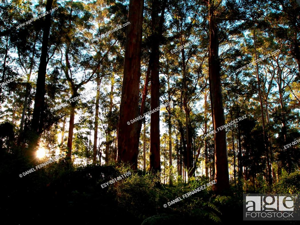 Stock Photo: Forest at dusk.