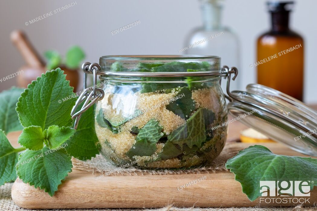 Stock Photo: Preparation of a homemade herbal syrup against common cold from silver spurflower and cane sugar.