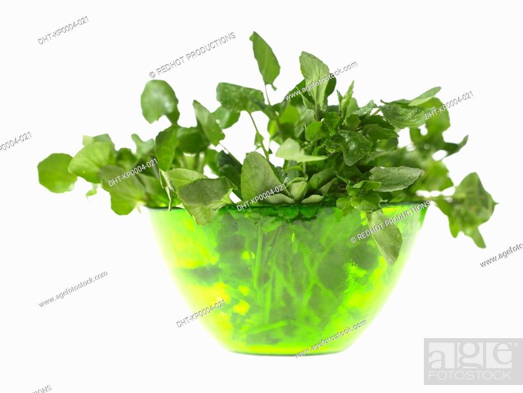 Stock Photo: Bowl of Watercress.