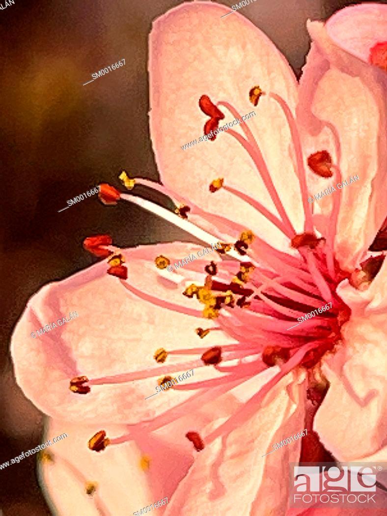 Imagen: Pink flower. Close view.