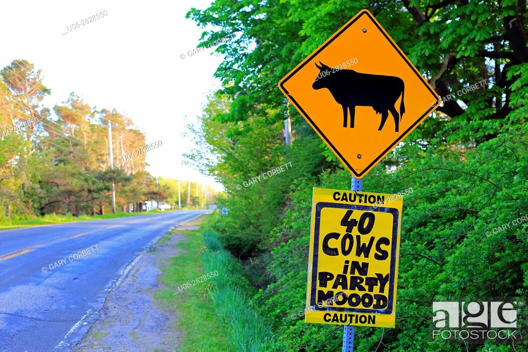 Stock Photo: Funny road sign about cattle.
