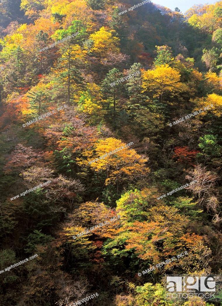 Stock Photo: autumn foliage in the mountain.