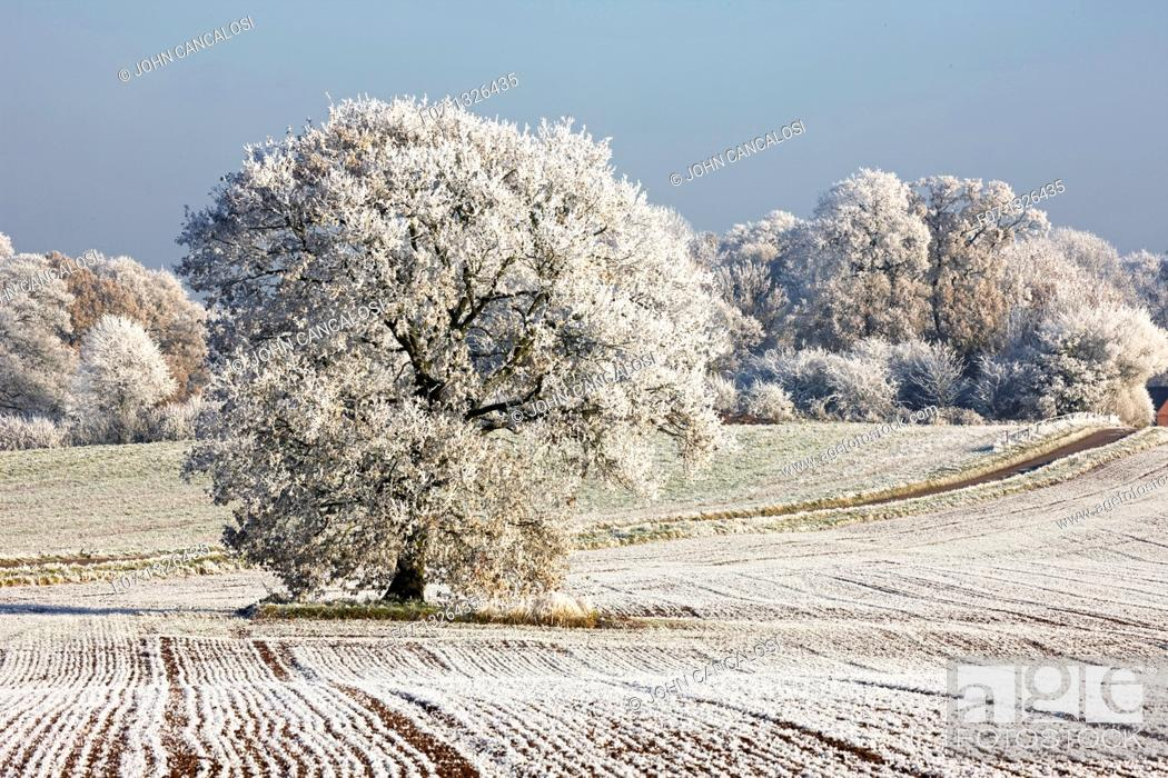 Stock Photo: Hoarfrost - Warwickshire - England.