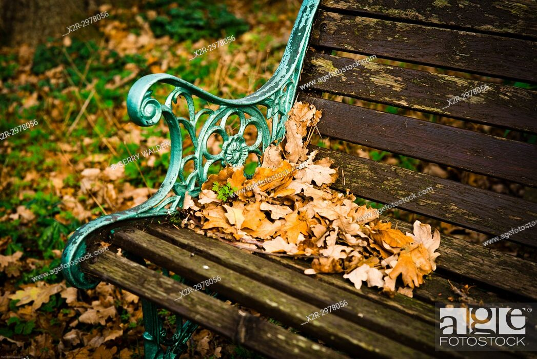 Stock Photo: The end of the summer comes to a bench in a garden in southern England, and fallen oak leaves herald the colder weather.