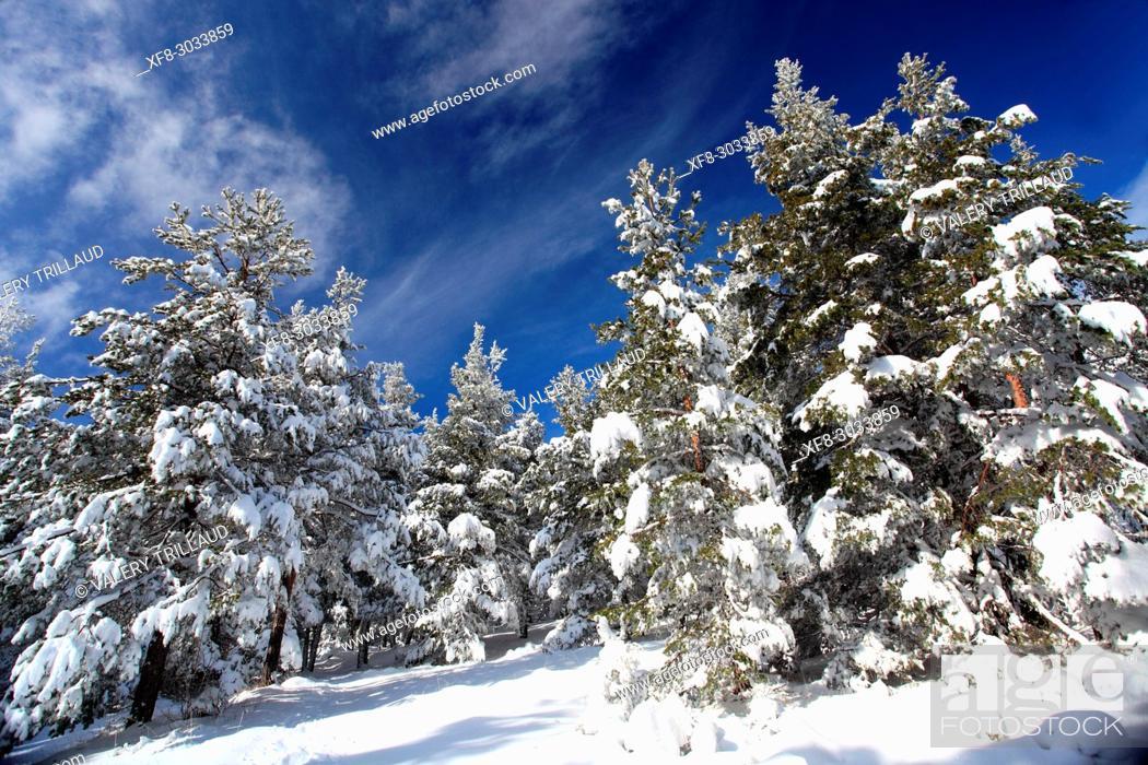 Stock Photo: Snowy landscape, Col de Bleine, Prealpes d'Azur regional park, Alpes Maritimes, 06, PACA, France.