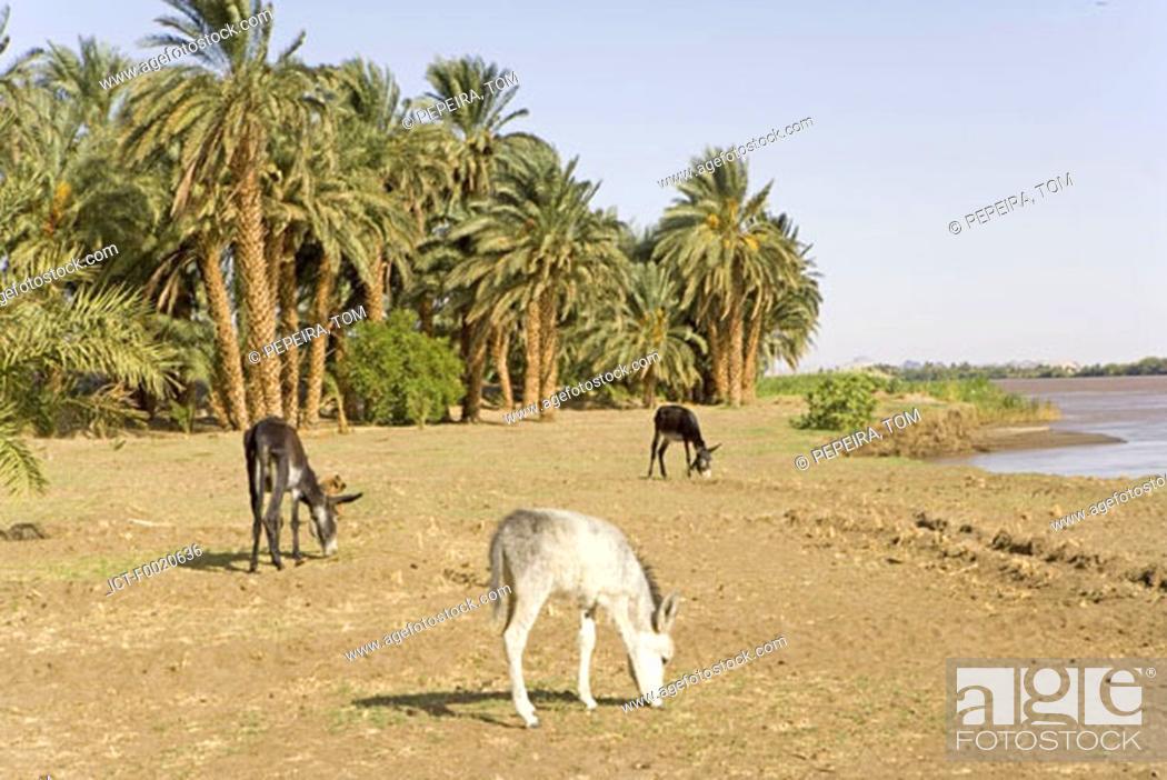 Stock Photo: Sudan, Eastern Sahara, Sesebi, the Nile side.