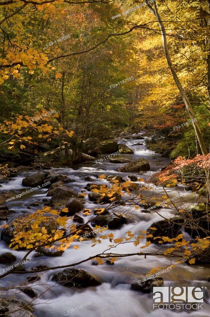 Imagen: Autumn, Tremont, Great Smoky Mountains National Park, TN.