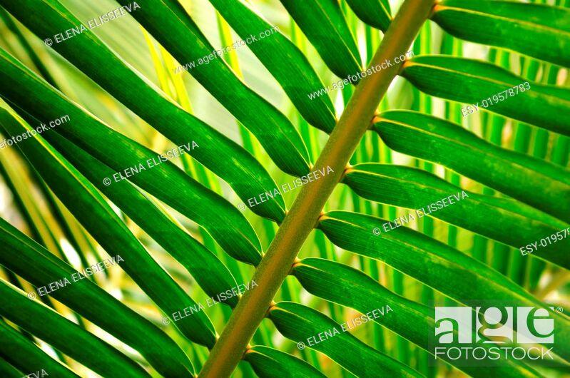 Photo de stock: Tropical leaf.