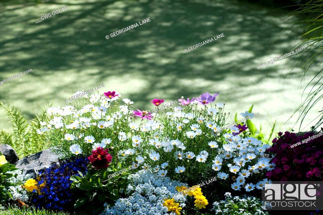 Stock Photo: BED OF SUMMER ANNUALS AND PERENNIALS AT EDGE OF POND COVERED WITH FLOATING MOSS.