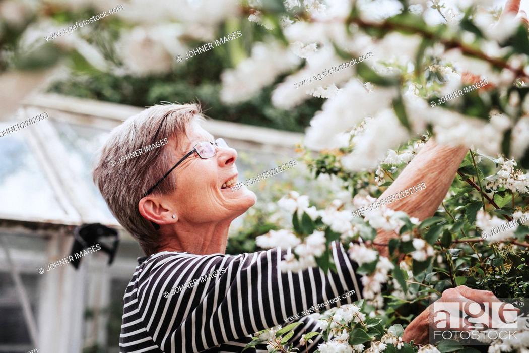 Stock Photo: Senior woman in garden.