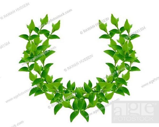 Stock Photo: Wreath from Green leaves.