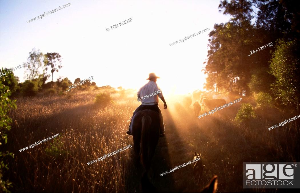Stock Photo: cowboy in Australia.