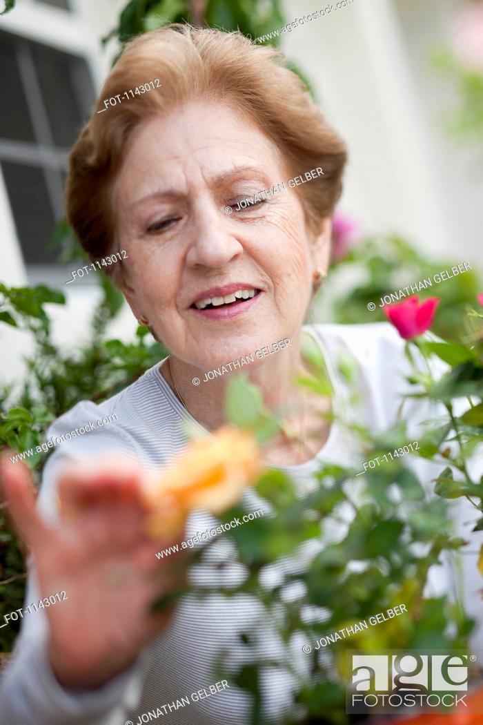 Stock Photo: A senior woman gardening.