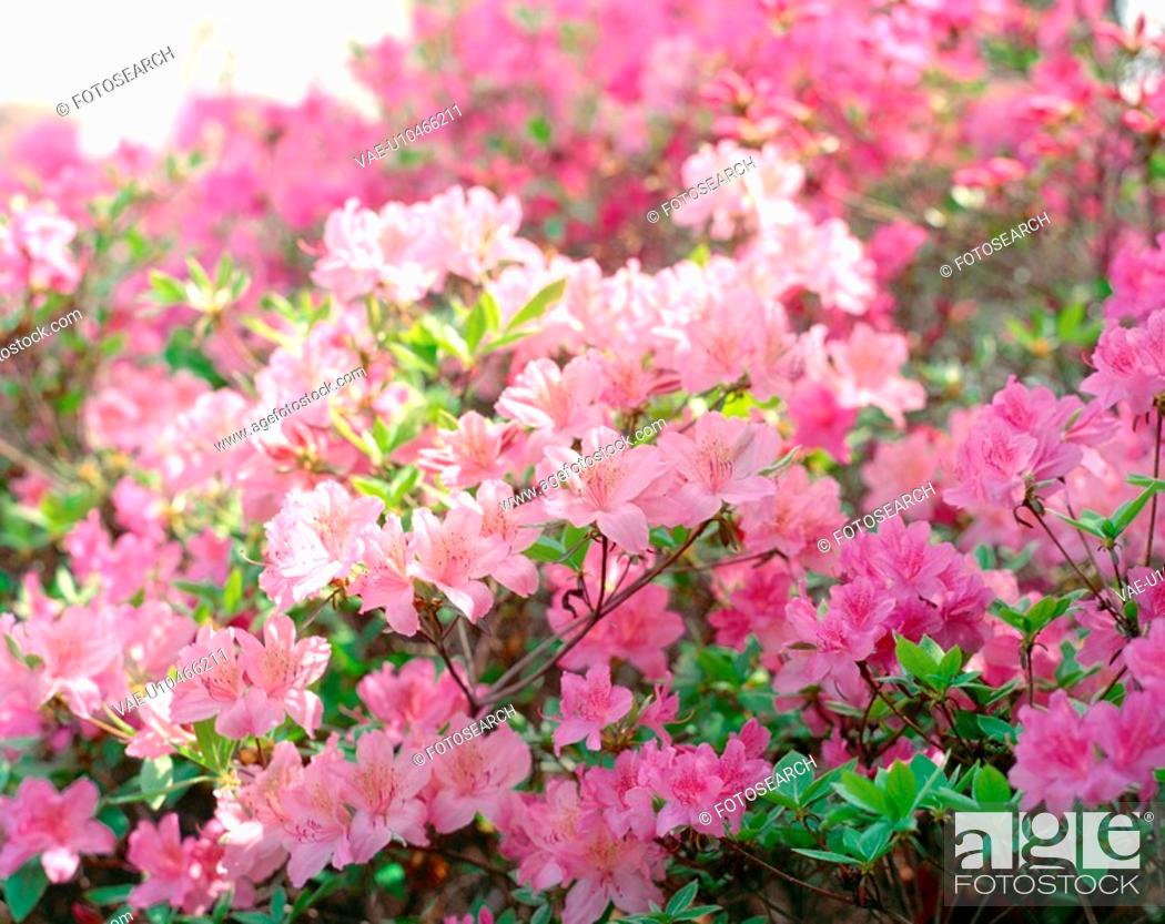 Stock Photo: flower, season, plant, nature, spring, film.