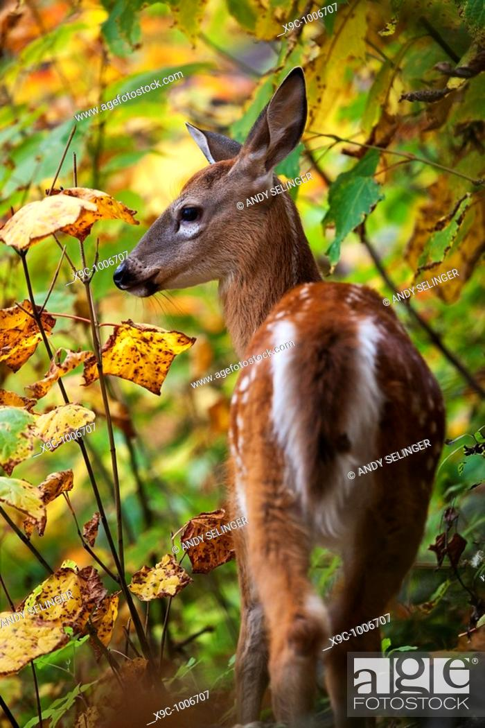 Stock Photo: A Wild Deer in the forest.