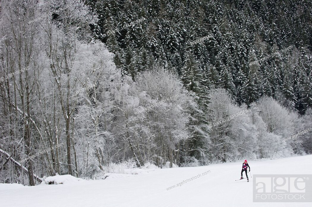 Stock Photo: Cross country skier on trail in snowy forest.