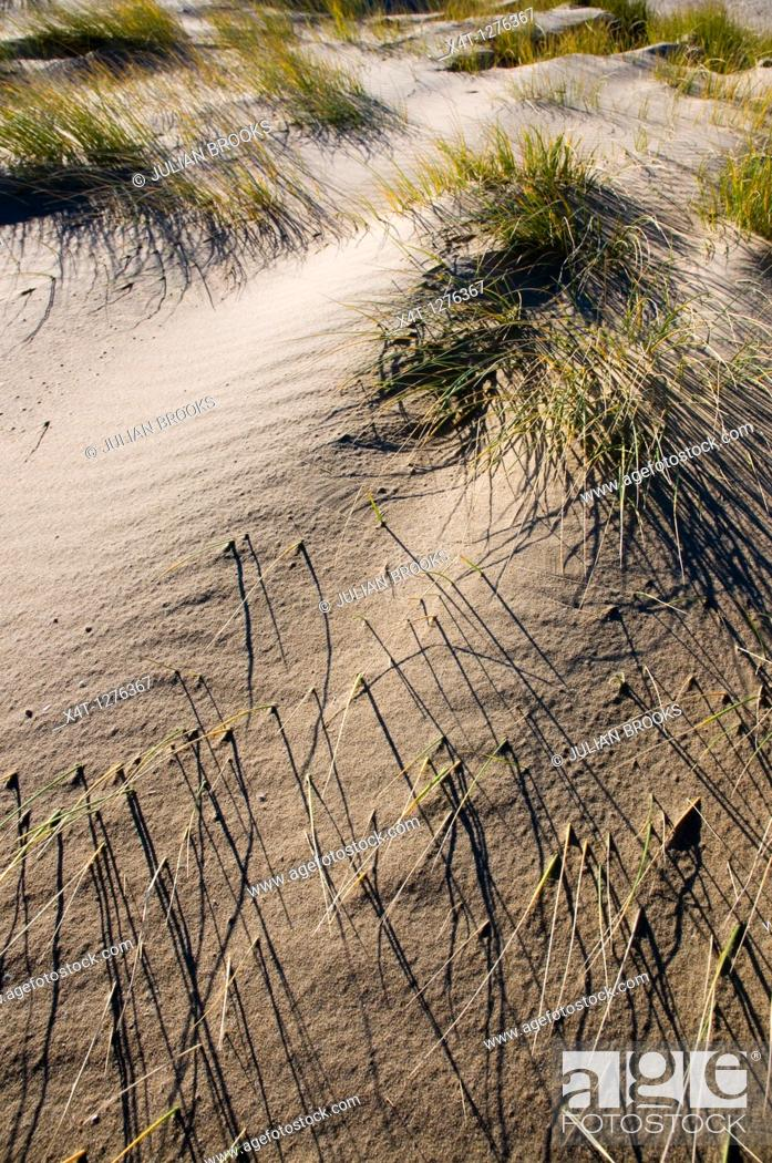 Stock Photo: patterns made by grass and wind on a sand dune.