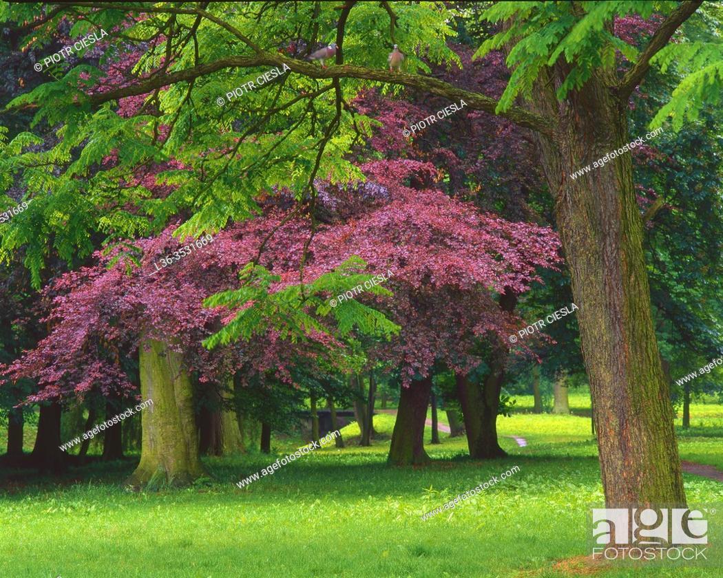 Stock Photo: Spring in a park, Poland.