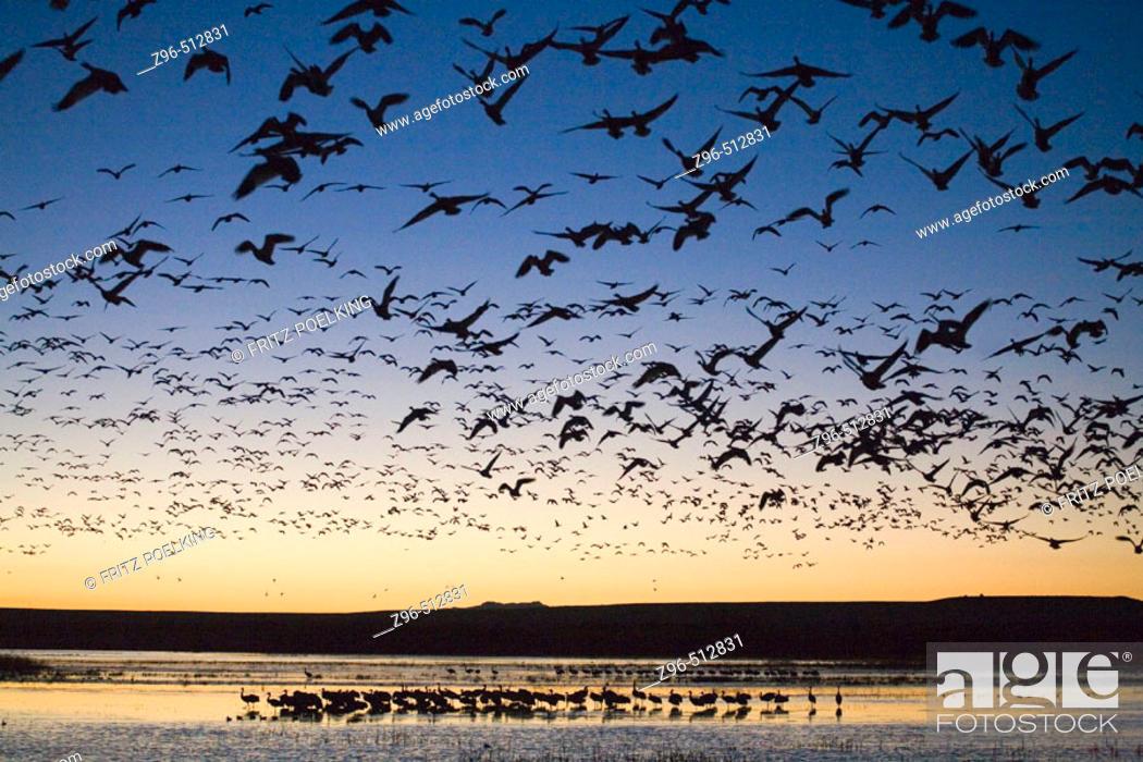 Stock Photo: Bosque del Apache National Wildlife Refuge. New Mexico. USA.