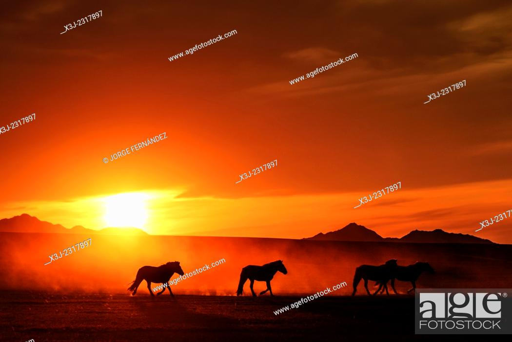 Stock Photo: Sunset and horses, Mongolian steppe.