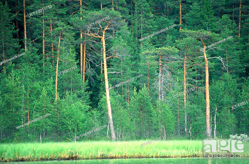 Stock Photo: Finland, forest in Kuopio vicinity.