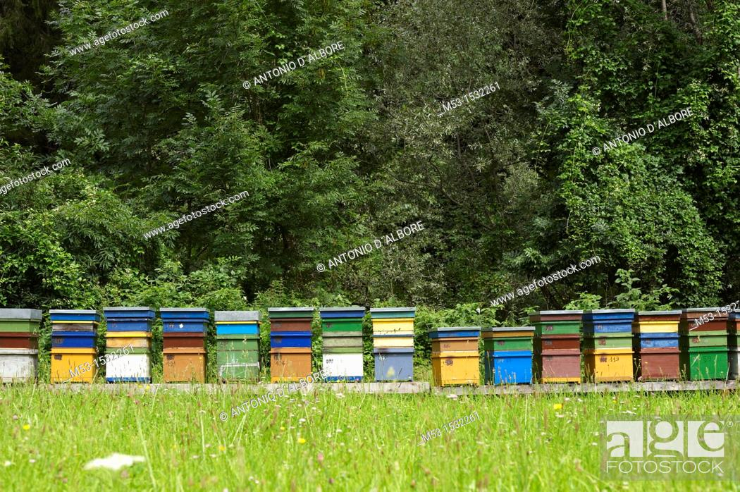 Stock Photo: Coloured artificial beehives made of wood.