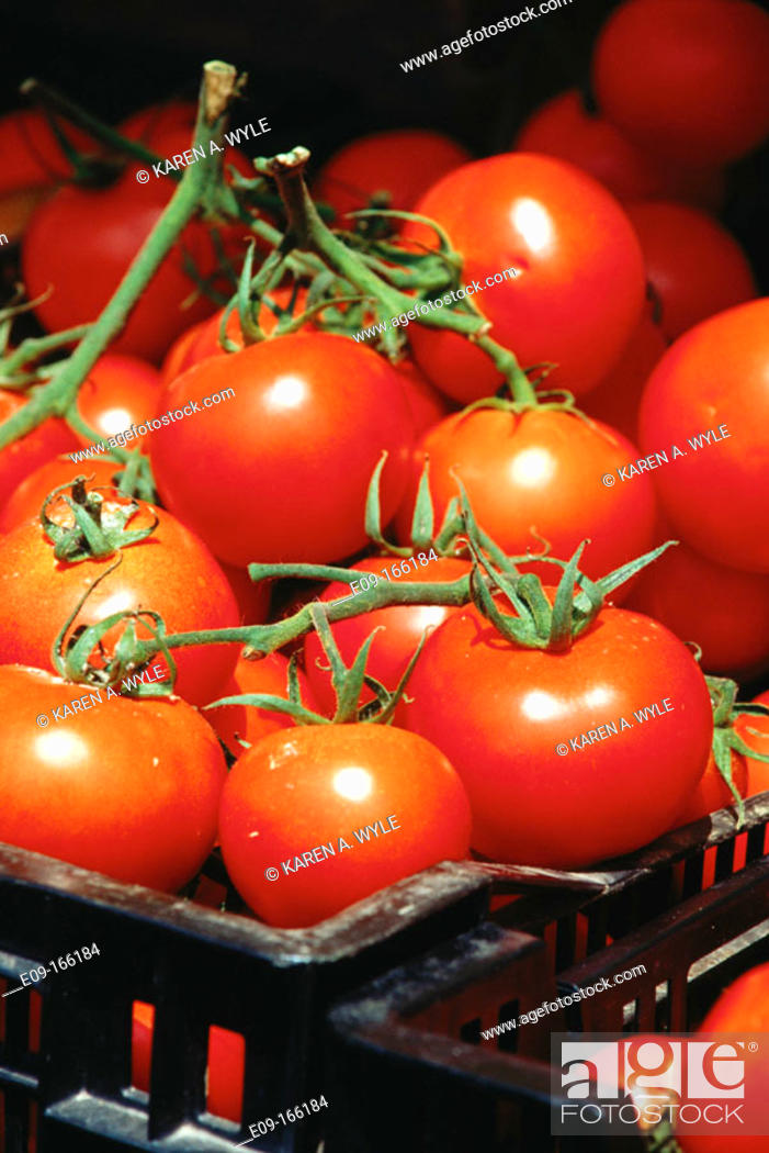 Stock Photo: Ripe tomatoes still on vine, in basket, for sale at market.