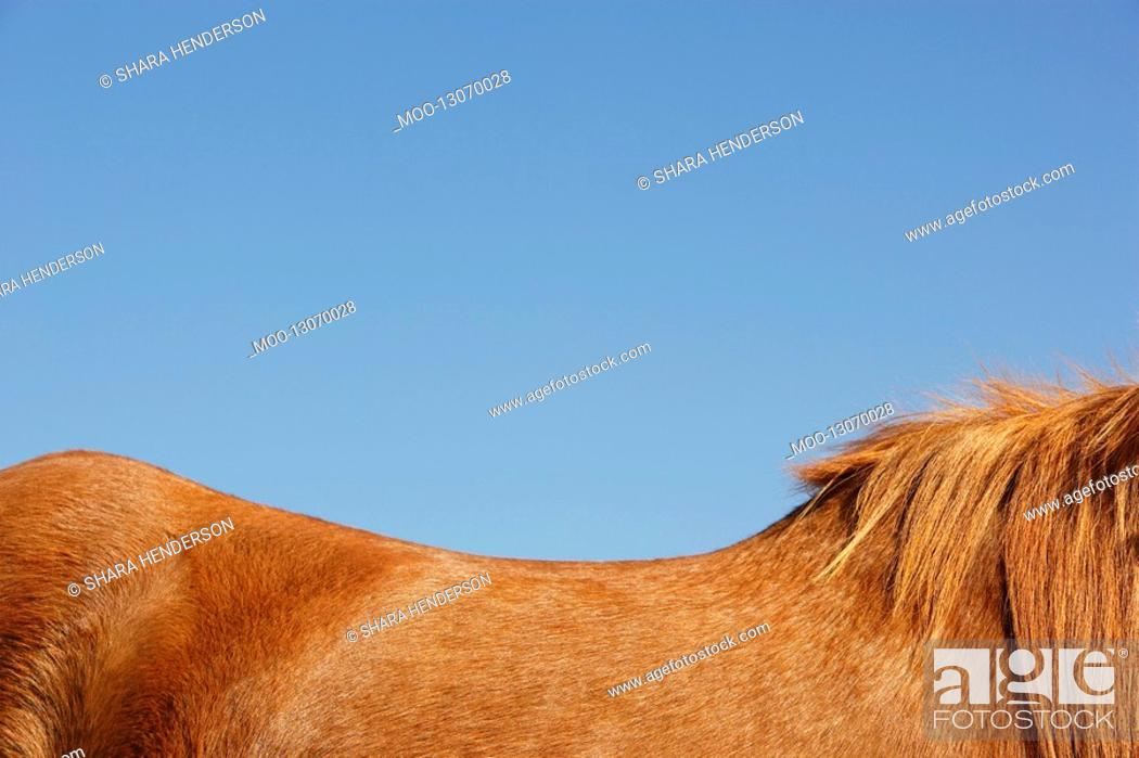 Stock Photo: Horse against blue sky side view top mid section.