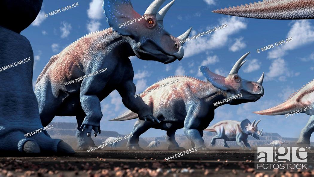 Stock Photo: Artwork of a herd of triceratops dinosaurs. These animals were common in the late Cretaceous period, from around 70 million years ago until the extinction of.