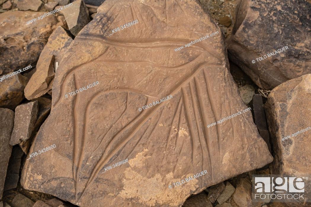 Stock Photo: petroglifo de una gacela, yacimiento rupestre de Aït Ouazik, finales del Neolítico, Marruecos, Africa.