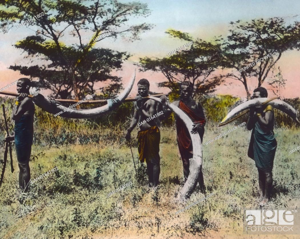 Stock Photo: German East Africa (1885 - 1918) - Poachers transporting ivory. Carl Simon Archive, image date circa 1905.