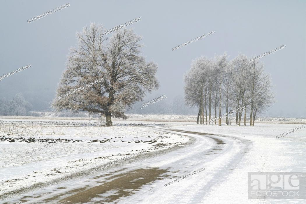 Imagen: winding road in winter partly covered with snow in flat countryside, Bavaria, Germany.