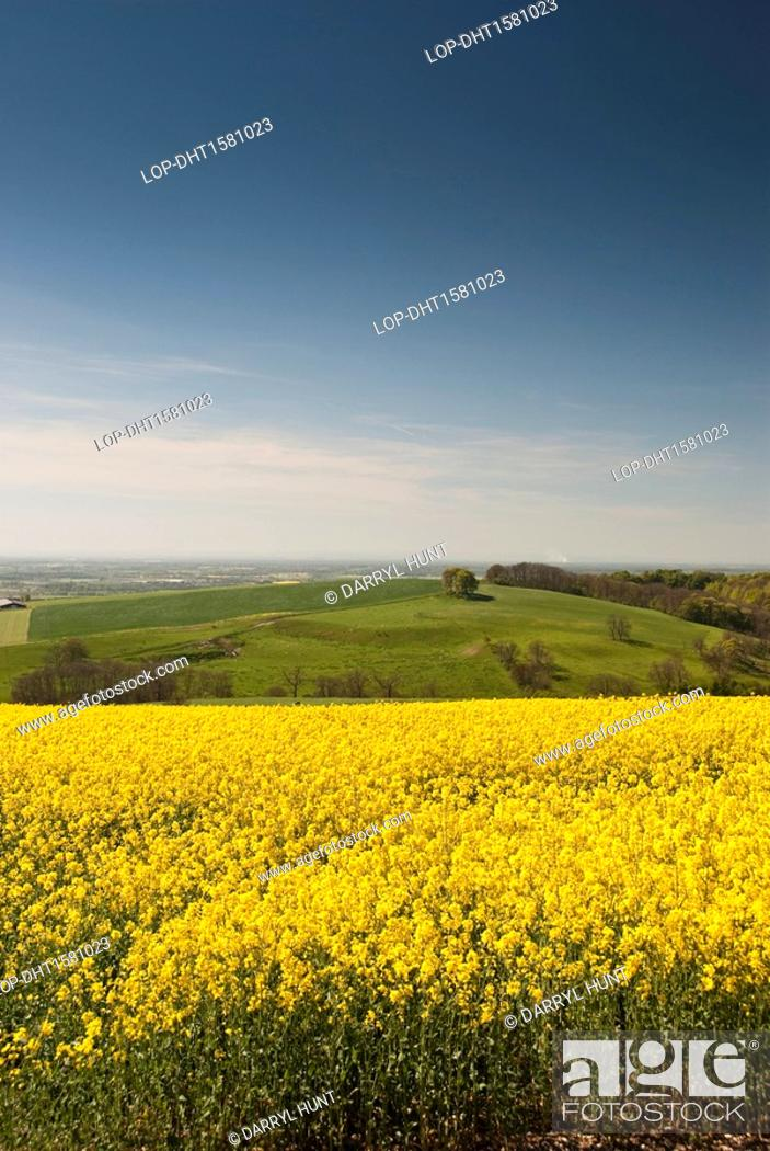 England east riding of yorkshire millington yellow flowers of the yellow flowers of the rape crop seen on the yorkshire wolds with the vale of york stretching out in the background mightylinksfo