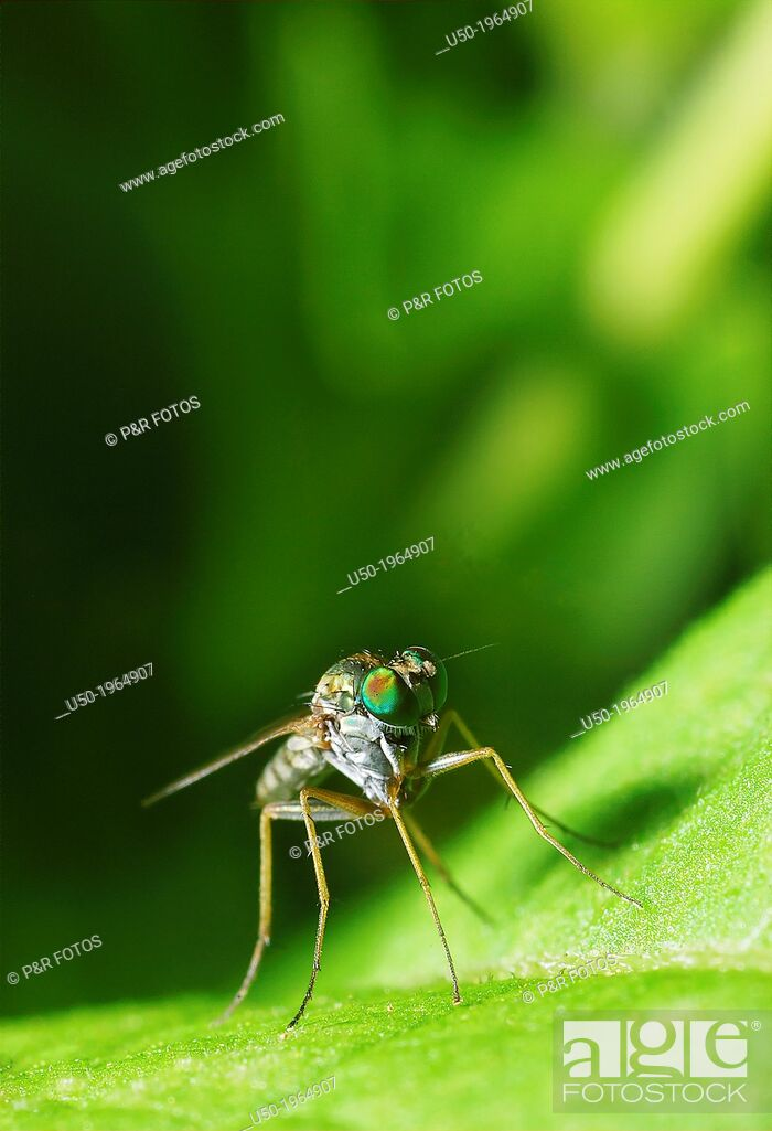 Stock Photo: Metallic fly.