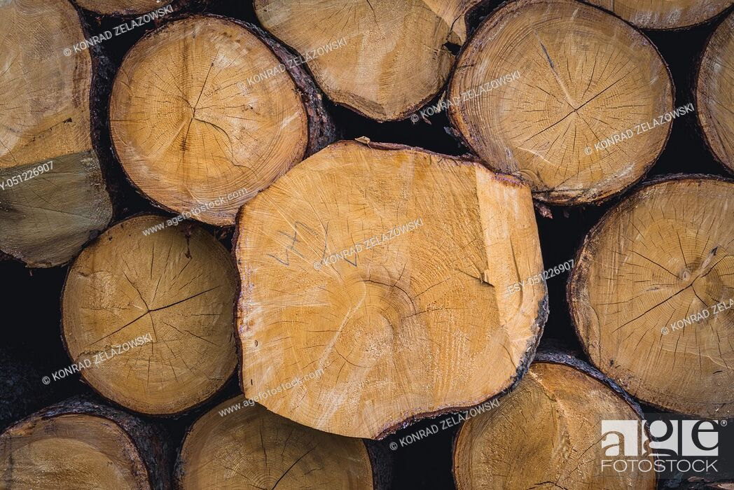 Stock Photo: Wood logs in Jasenna village in Zlin Region, Moravia in Czech Republic.