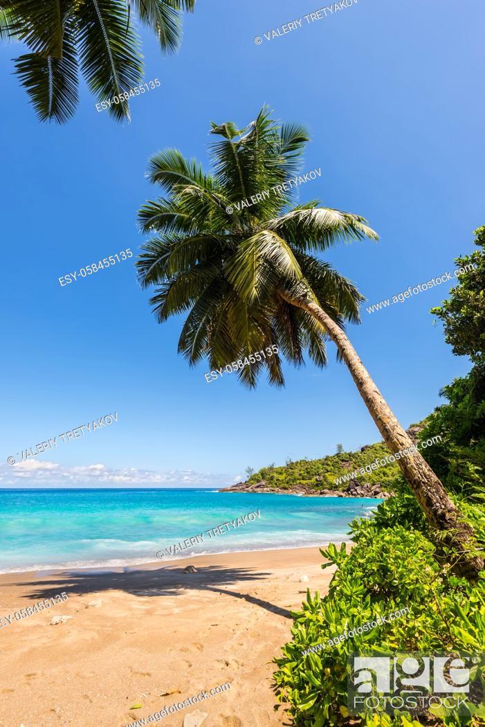 Stock Photo: Dream Seascape Coast - Idyllic paradise palm Anse Major beach on the North-West side of Mahe Island near the town of Bel Ombre, Seychelles.