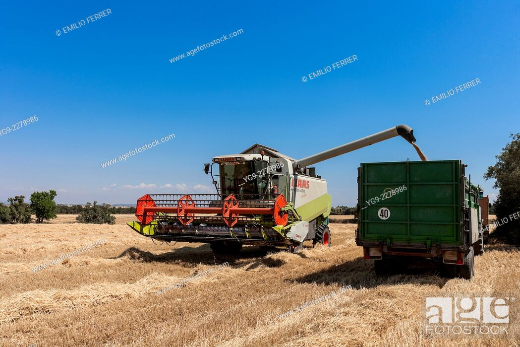 Stock Photo: Combine harvester downloading.