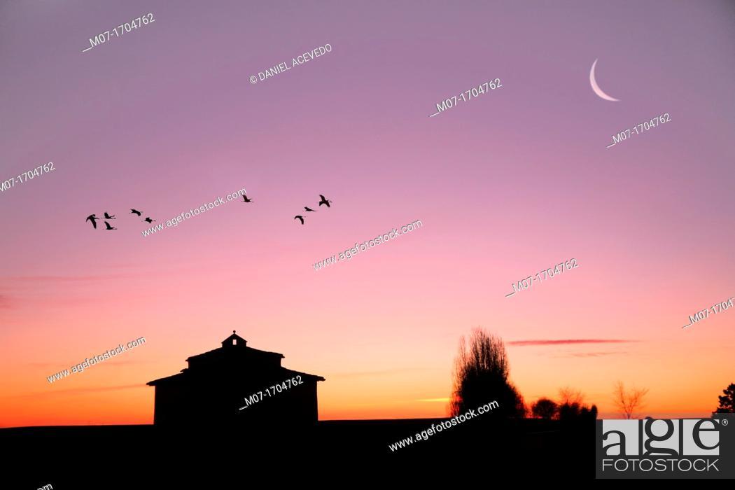 Imagen: flock of birds flying over tierra de Campos, Medina de Rioseco, Valladolid, Spain.