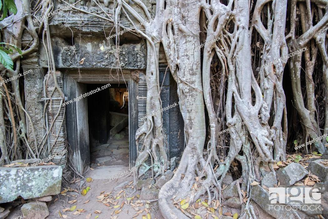 Stock Photo: The strangler fig roots which have attacked Ta Prohm temple are one of its most amazing features.
