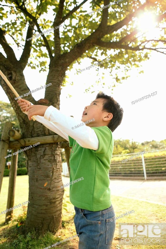 Stock Photo: Boy raising a stick near a tree in the garden.