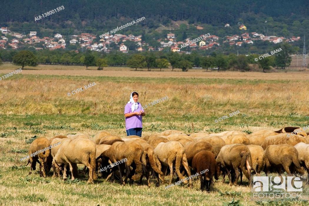 Stock Photo: Bulgaria - North-West Region - Rhodope Mountains - Sheperd.