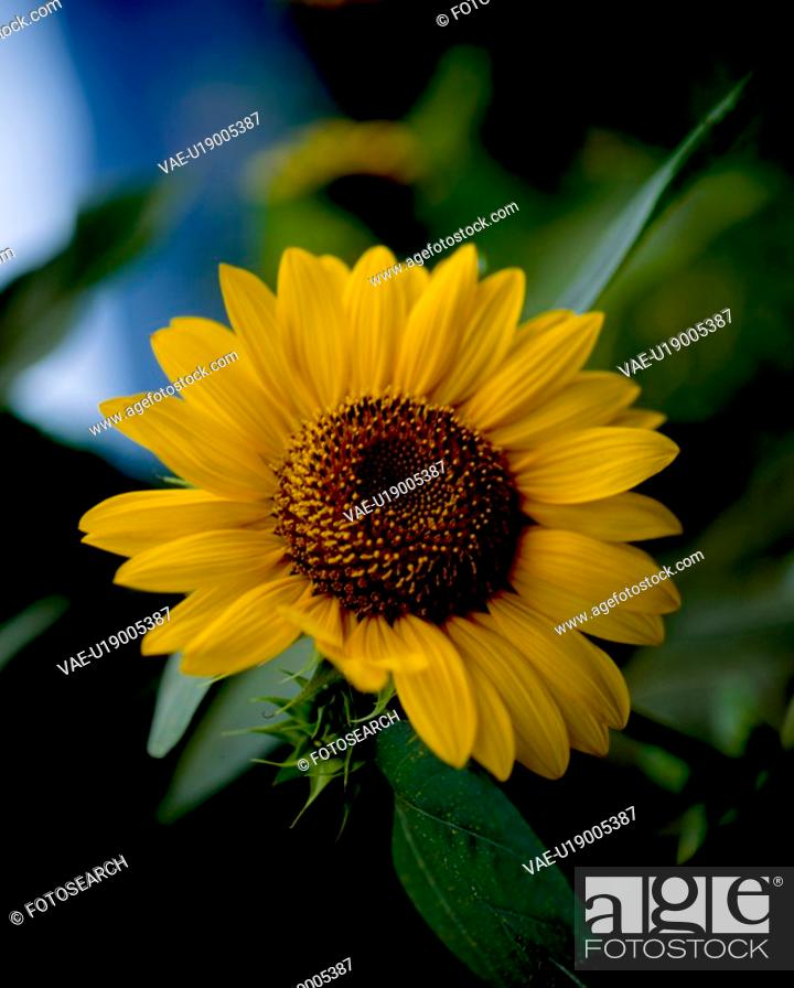 Stock Photo: flowers, nature, flower, closeup, scene, yellow flower, landscape.