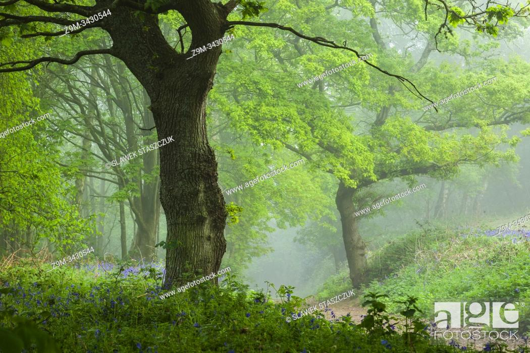 Stock Photo: Misty spring morning in a West Sussex woodland, England.