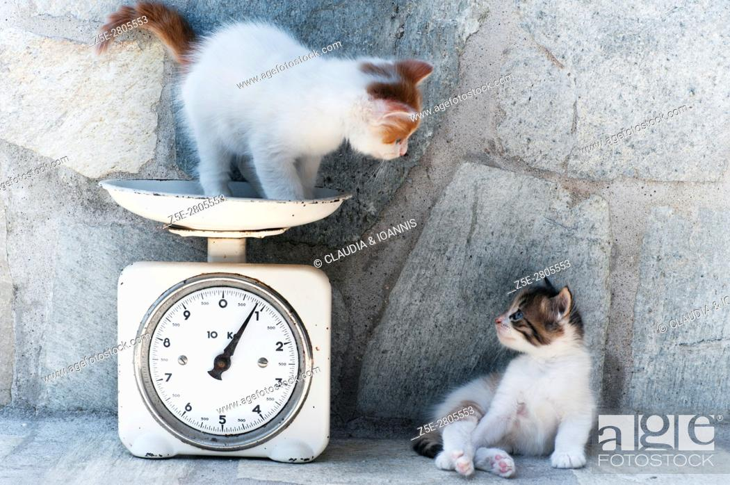 Stock Photo: A kitten is standing on a kitchen scale.